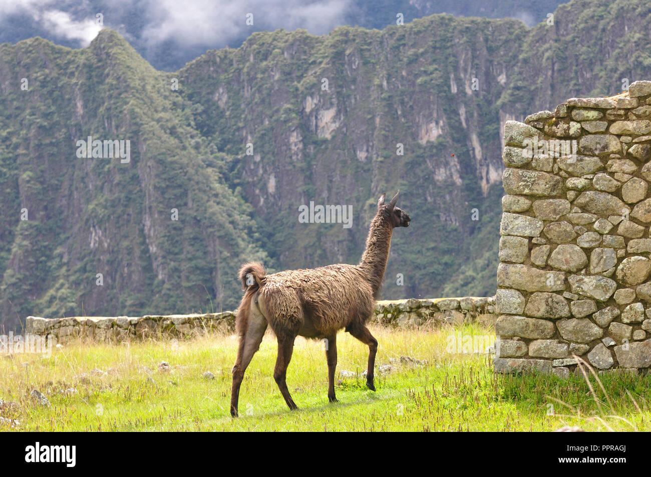 Fotografias diversas; Natureza, vida selvagem, históricos, paisagens prédios e culturas da America do Sul. Imagen De Stock