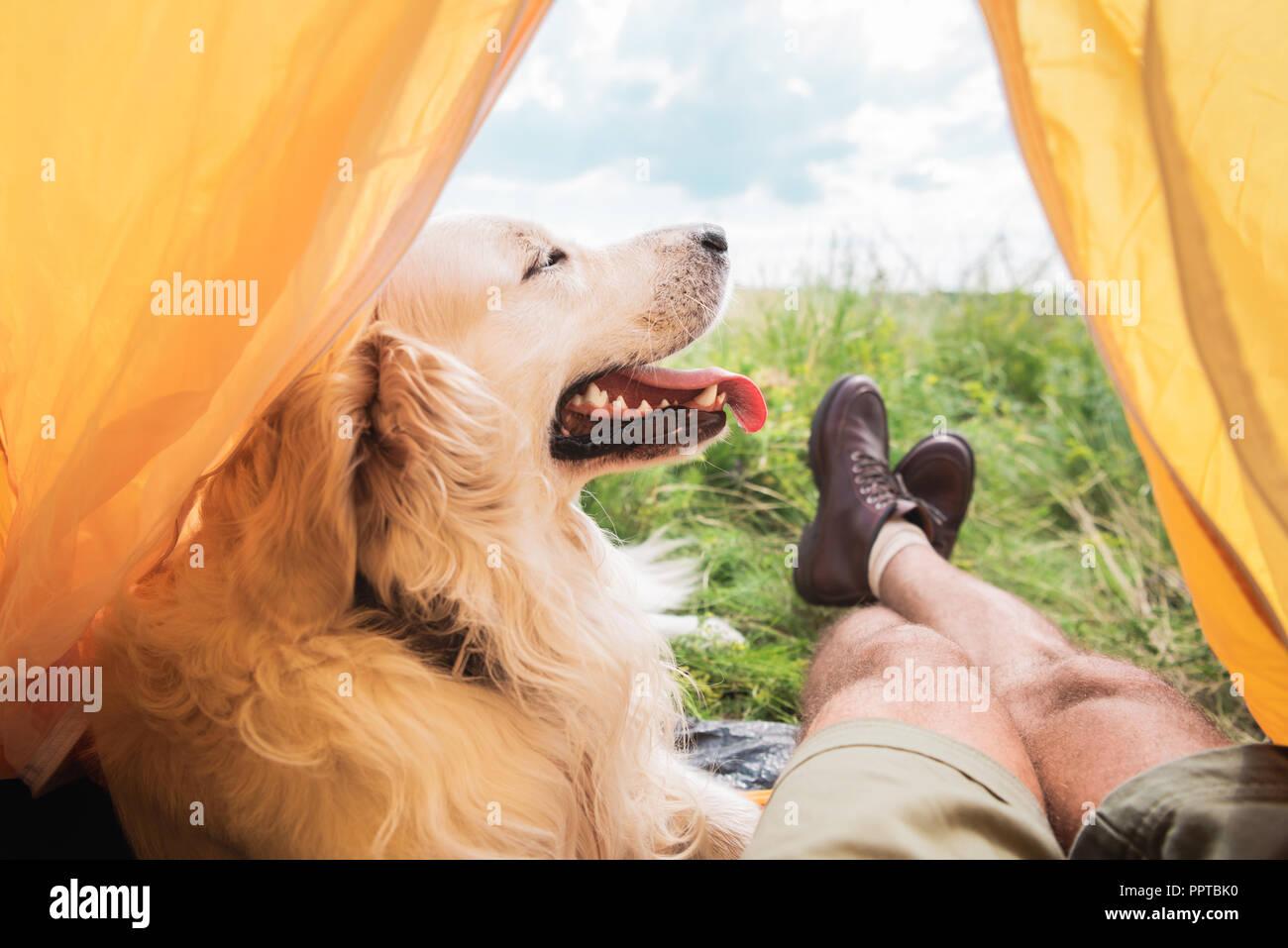 Vista parcial del turista en carpa con golden retriever perro de pradera Imagen De Stock