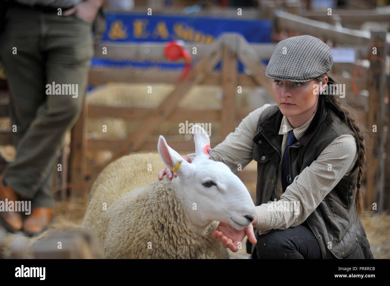 Masham ovejas Fair Yorkshire, Inglaterra Foto de stock