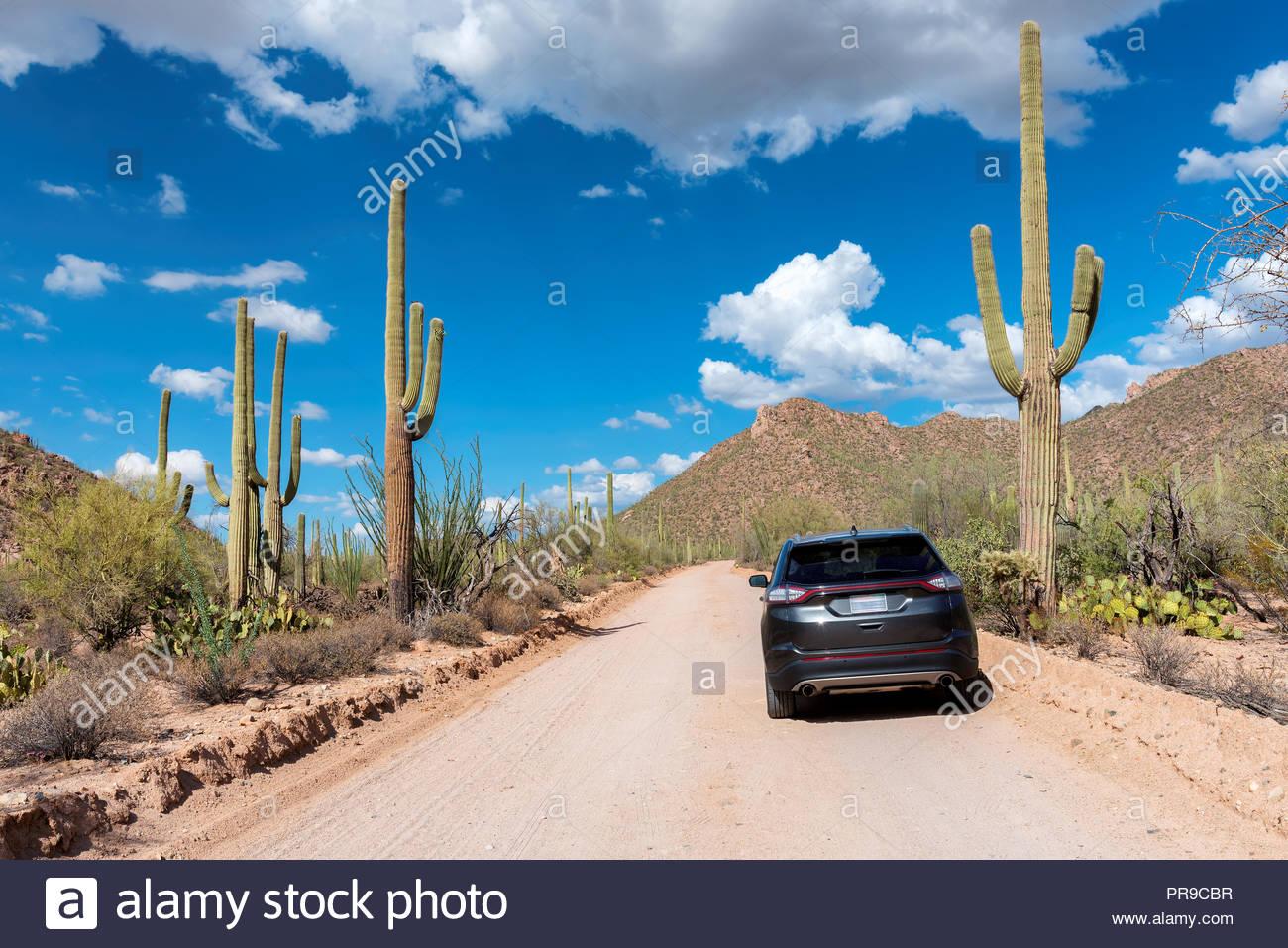Viaje por carretera entre los cactus gigantes de saguaro Imagen De Stock