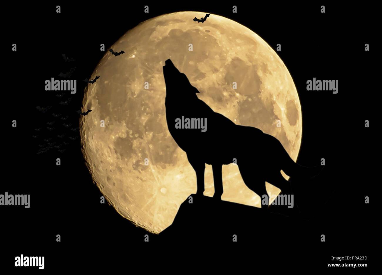 El Lobo Aullando A La Luna Llena Foto Imagen De Stock 220882689