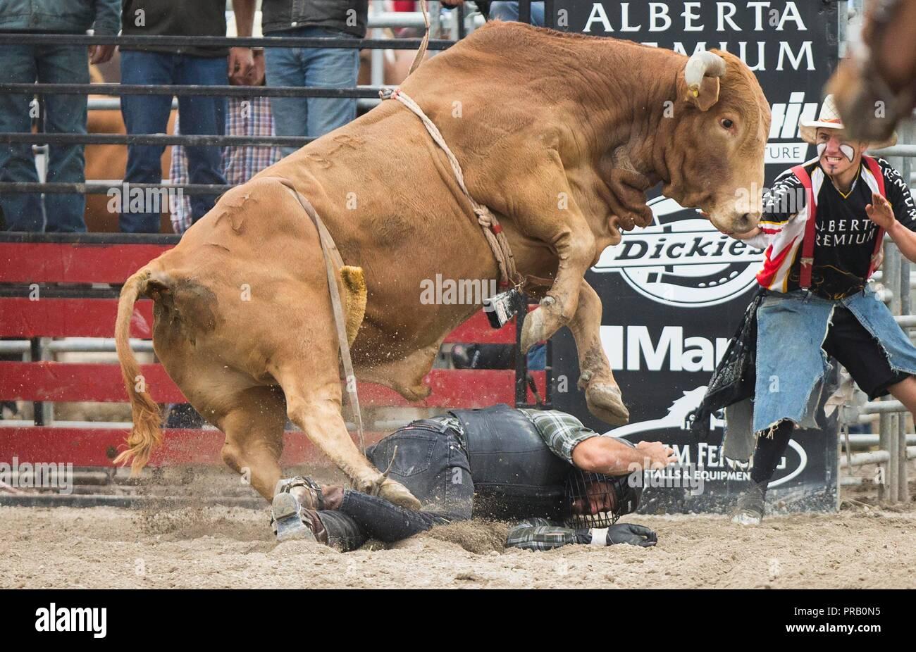 f44f7e286 Rodeo Show Imágenes De Stock   Rodeo Show Fotos De Stock - Alamy