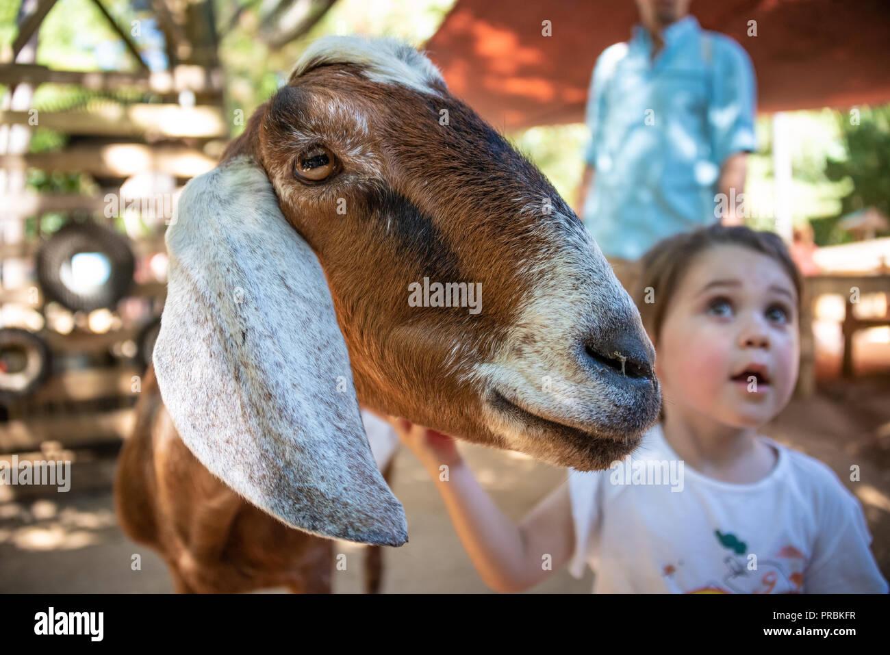 Niño acariciar a una cabra en el zoológico de Atlanta's Outback Station Zoo infantil acariciándole zona cerca del centro de Atlanta, Georgia. (Ee.Uu.) Imagen De Stock