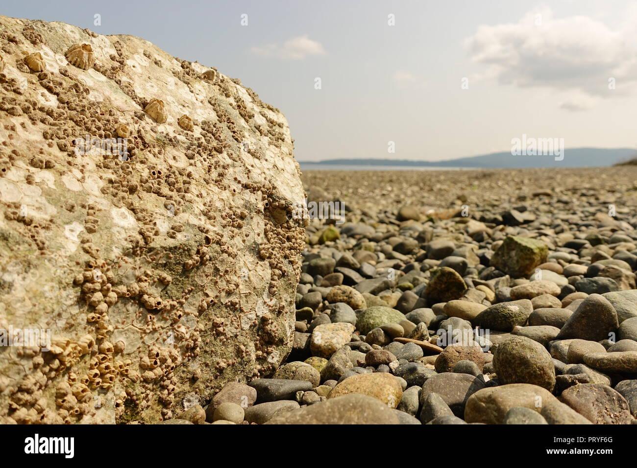 Un viejo clavo en un trozo de madera a la deriva en el borde de una playa de la isla de la costa oeste. La uña parece haber estado en su lugar durante muchos años. Foto de stock