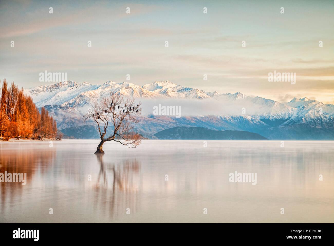 En invierno el Lago Wanaka, Otago, Nueva Zelanda, mientras que las aves se posan en el árbol único y la bruma elevándose desde el agua. Foto de stock