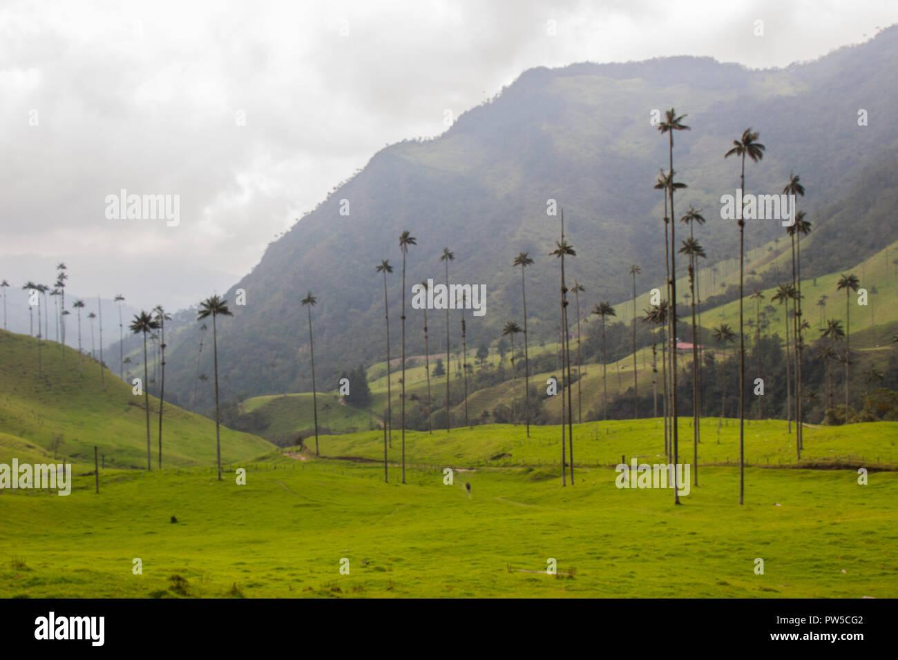 Valle de Cocora, Salento, Colombia Imagen De Stock