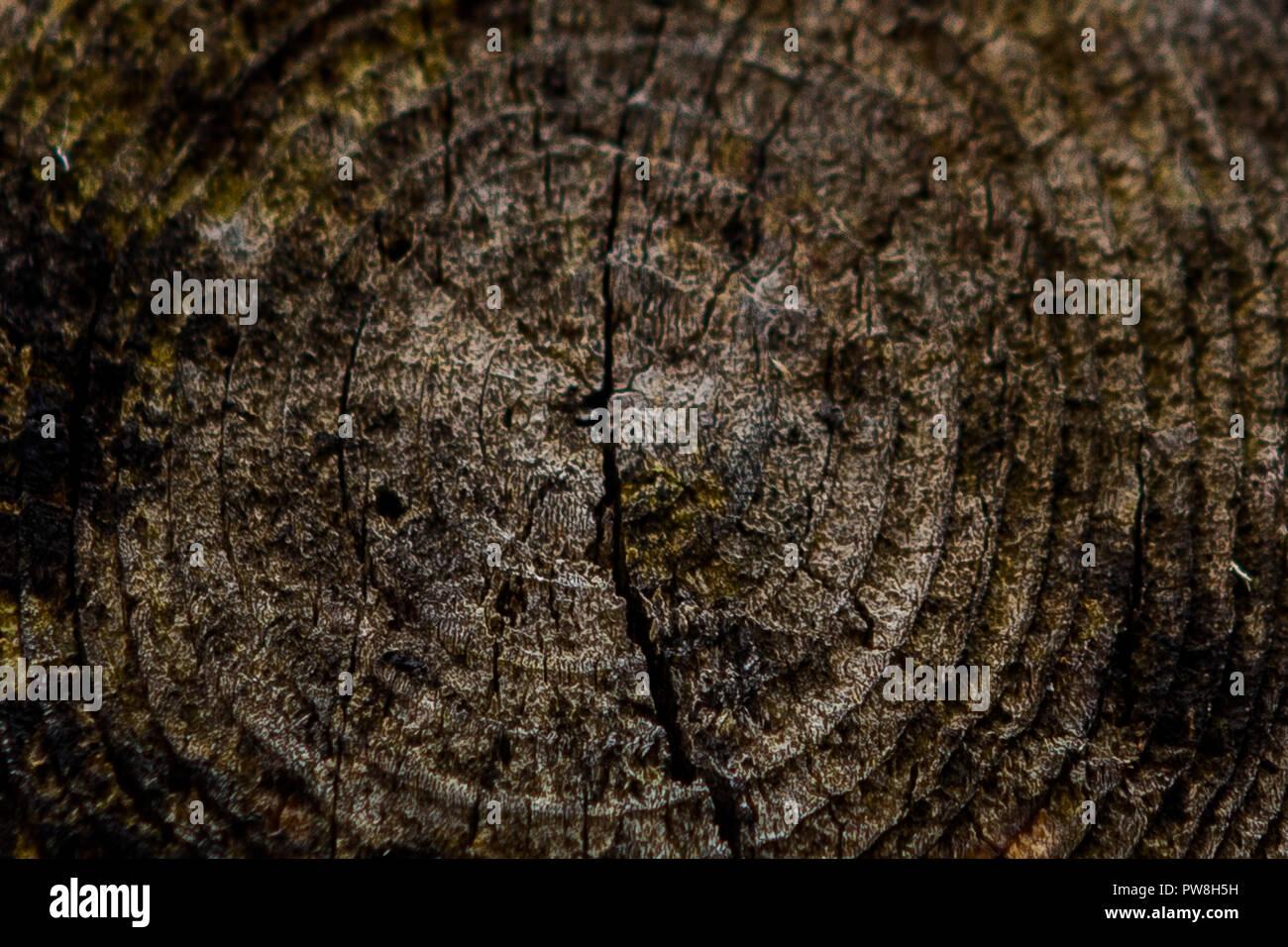 Los anillos anuales de madera pintada de marrón Foto de stock