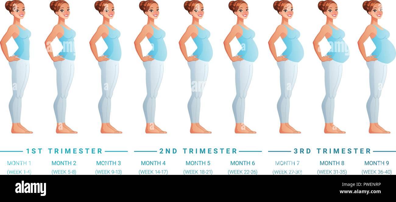0aec8c08f Etapas del embarazo mes por mes. Ilustración vectorial aislados ...