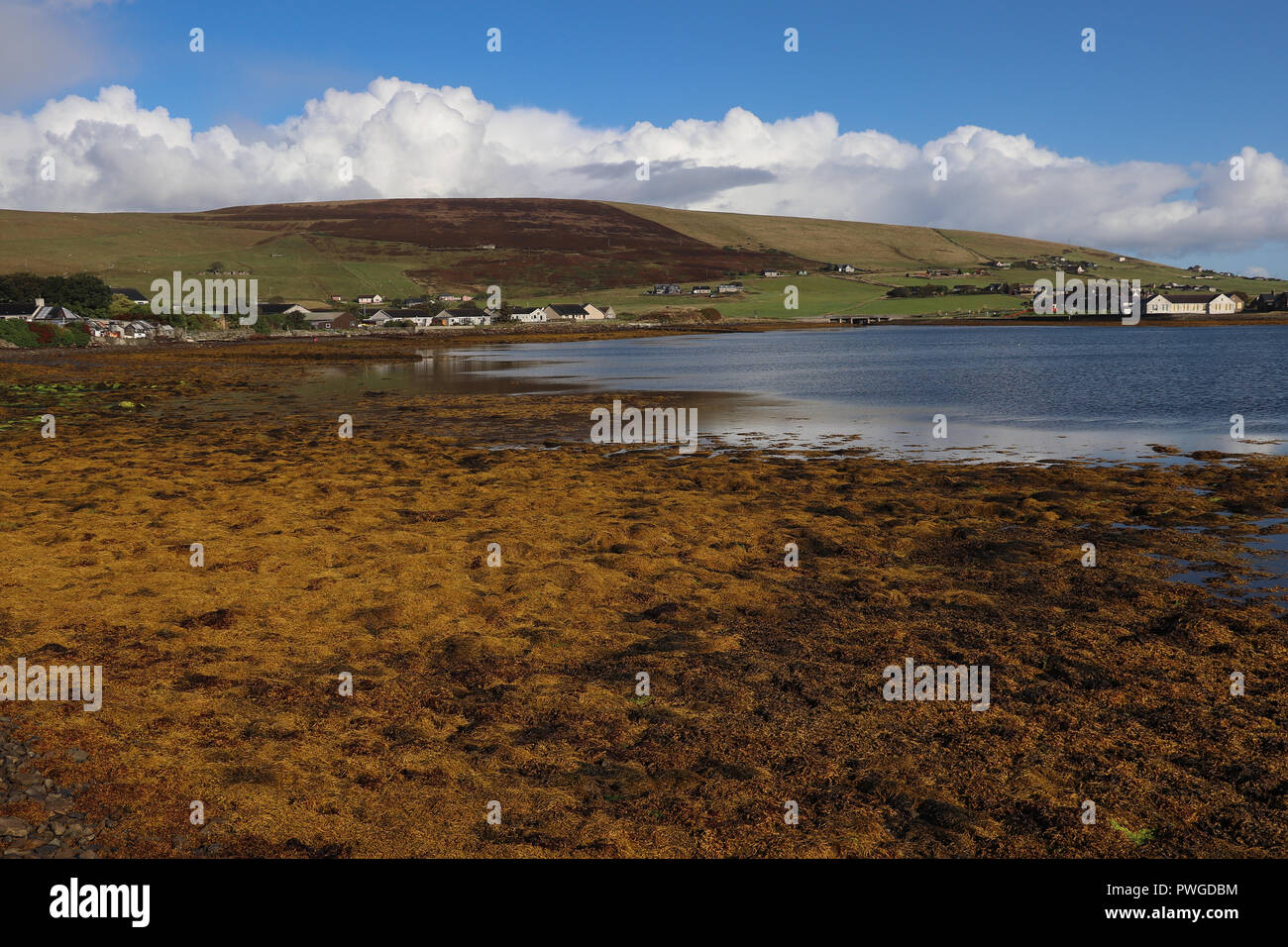 Colorido playa rocosa cerca Finstown, Orkney, Escocia cubiertos de algas marinas marrones en la marea baja: el mar refleja el cielo azul con nubes blancas. Verdes colinas afar. Foto de stock