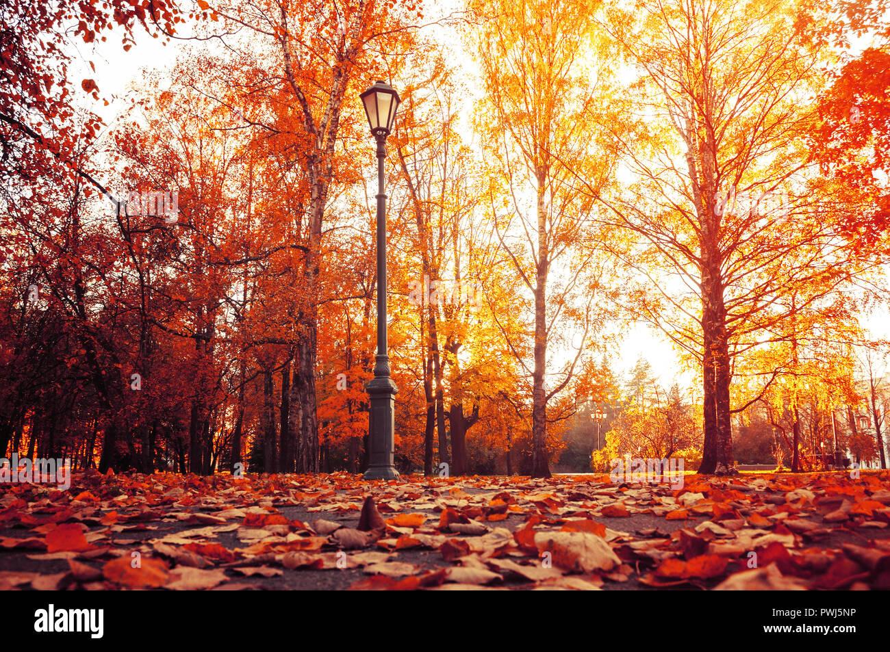 Ciudad Paisaje de otoño. Árboles de otoño en otoño soleado parque iluminado por el sol y caído hojas de arce en el primer plano. Escena de otoño del parque de la ciudad Foto de stock