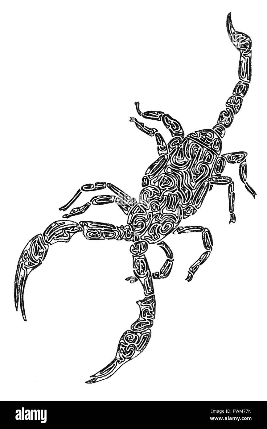 Dibujo De Un Escorpion Dorado ilustración de un escorpión, blanco y negro, dibujo