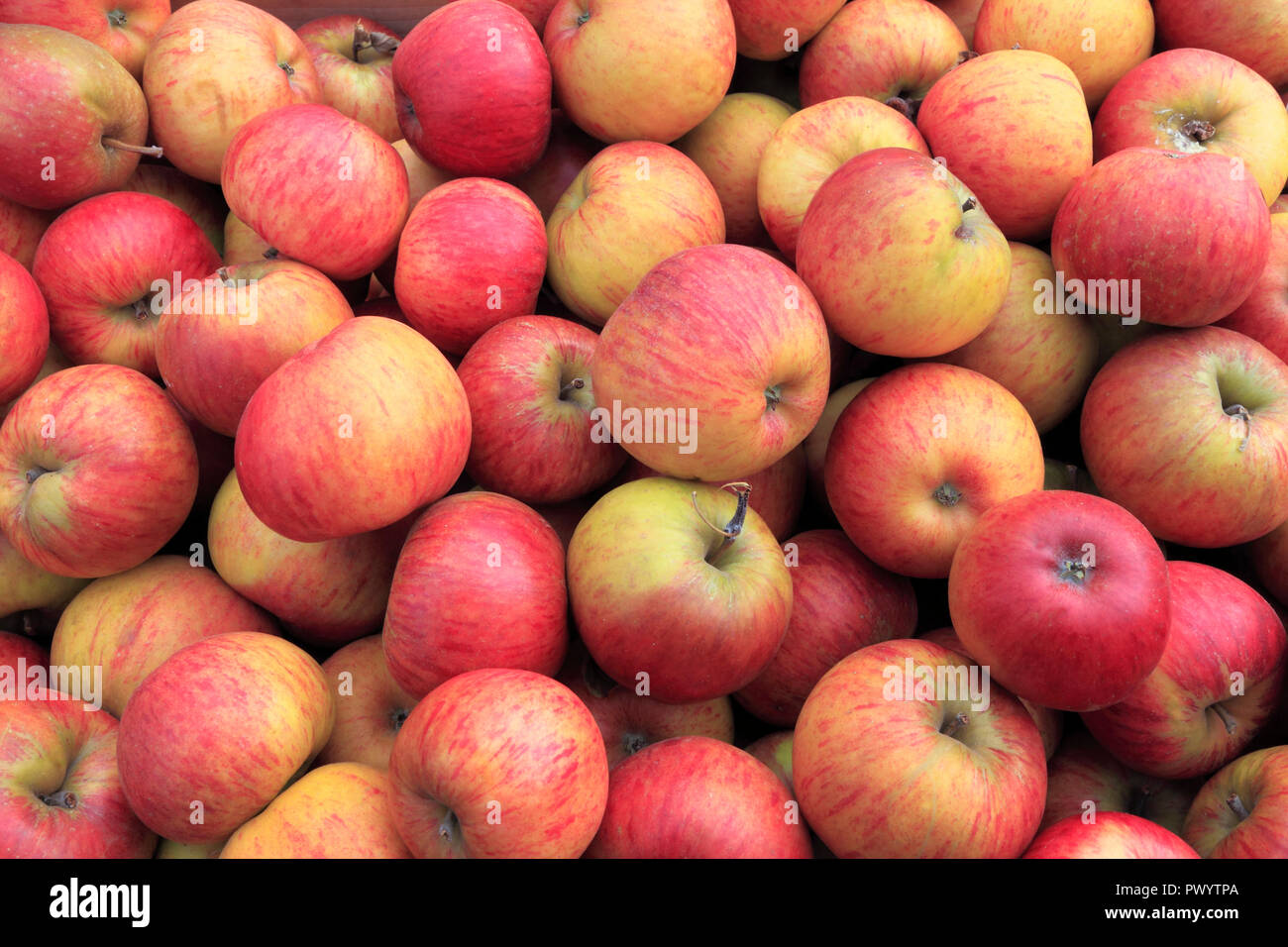 Apple 'perfección', manzanas, Malus domestica, Farm shop, pantalla, denominada variedad Imagen De Stock