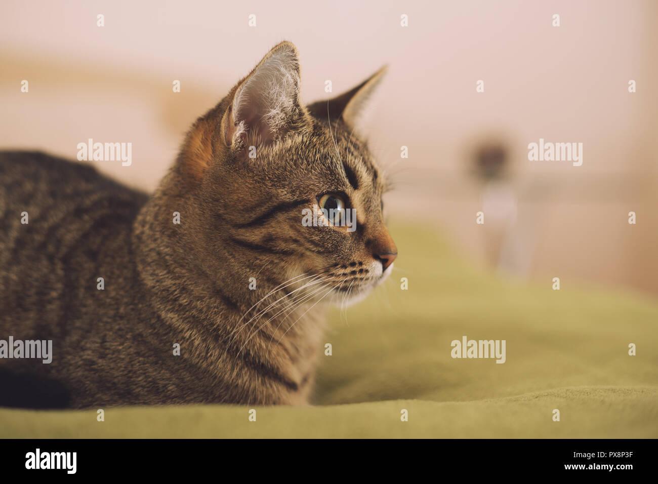 Foto de la hermosa joven gato tumbado en la cama. Imagen De Stock