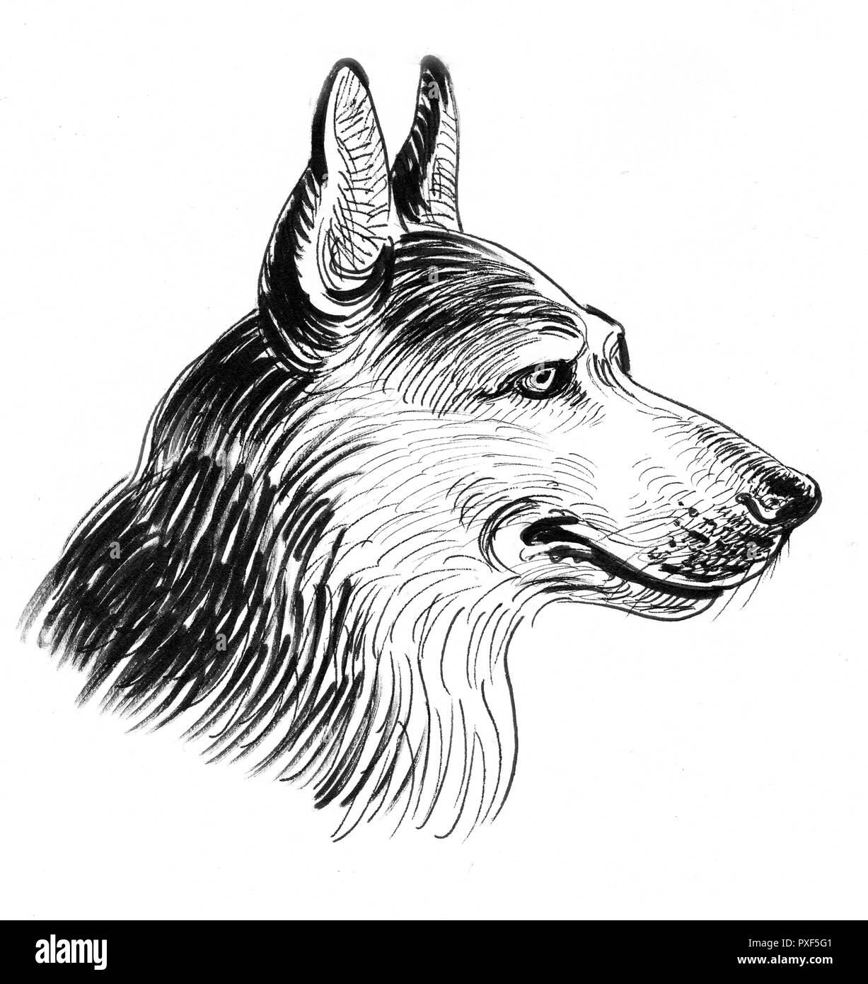 Cabeza De Perro Pastor Alemán Dibujo En Blanco Y Negro De