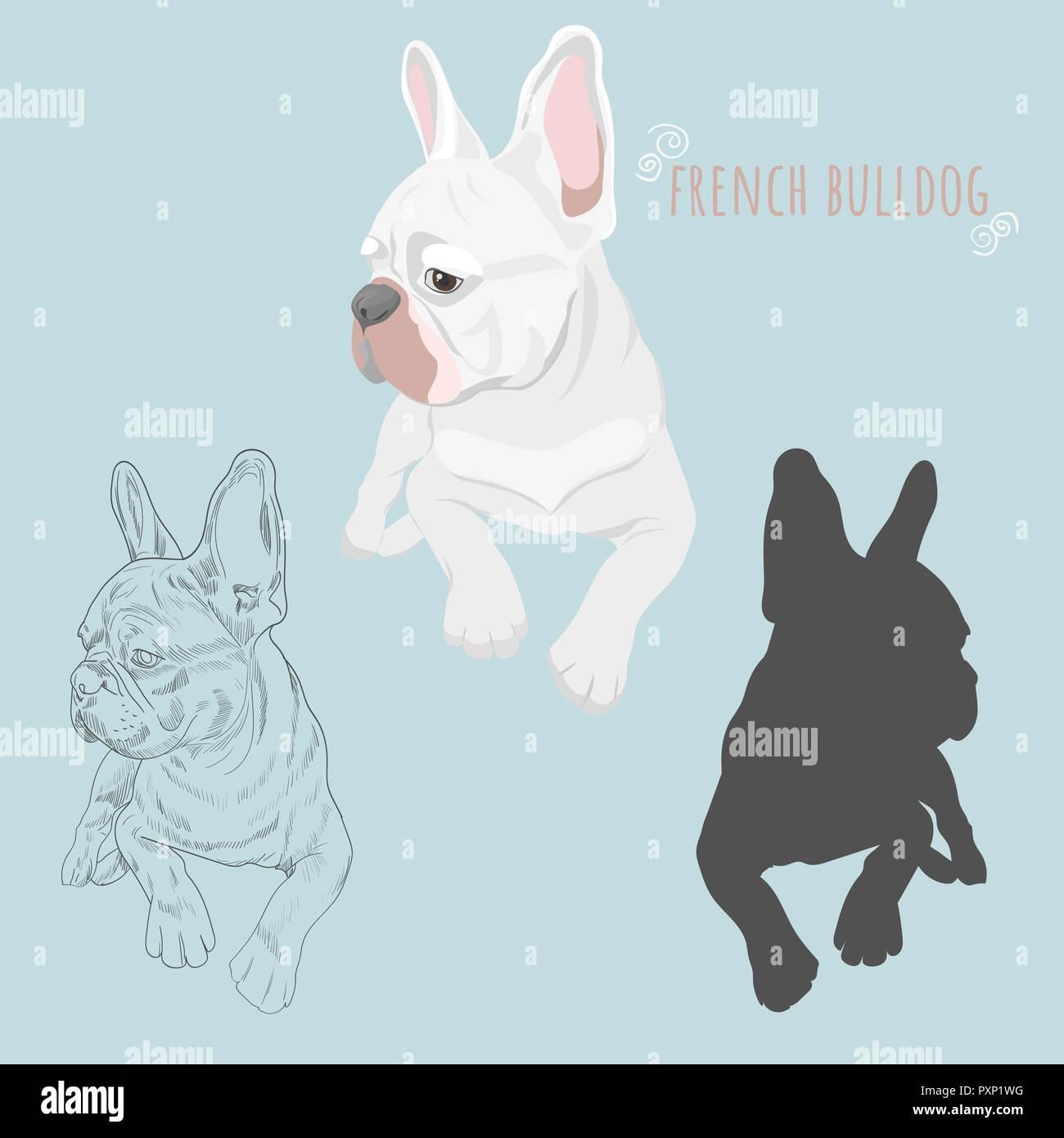 White French Bulldog Imágenes De Stock White French Bulldog Fotos