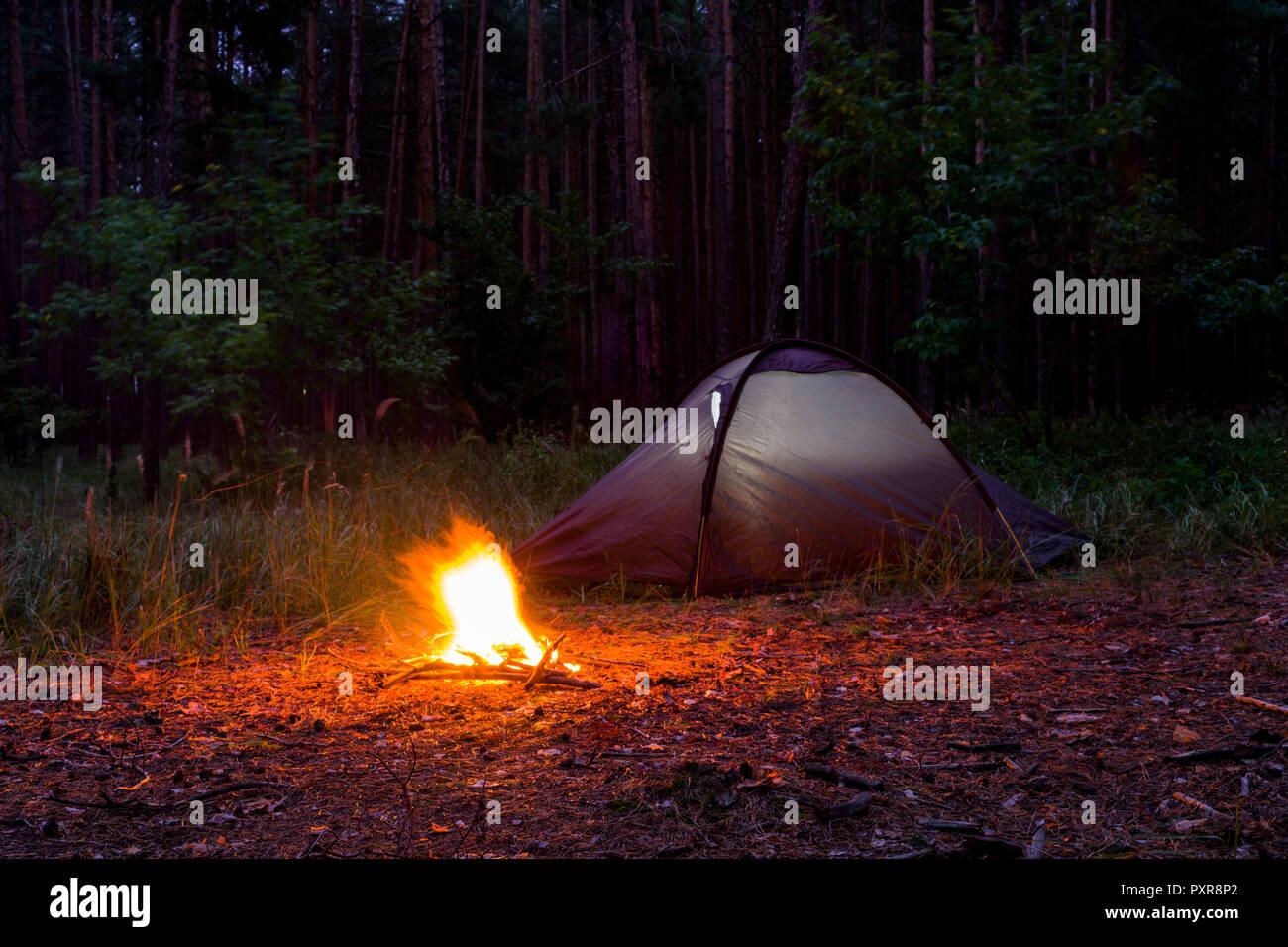 Tiendas de campaña en un bosque de pinos en la noche Foto & Imagen ...