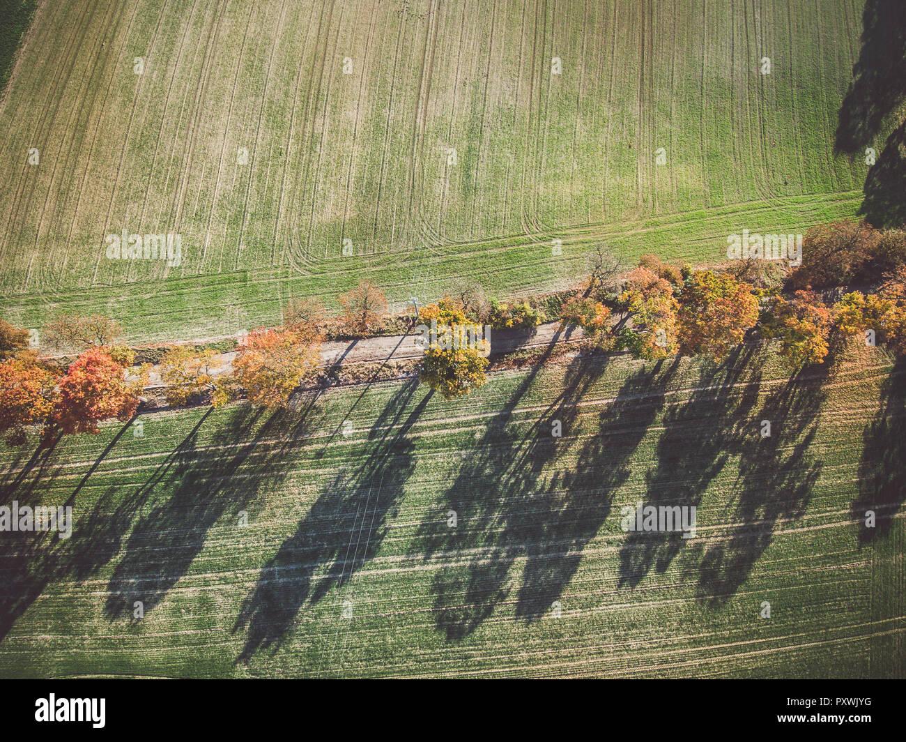 Callejón de otoño de árboles entre verdes campos en campo Foto de stock