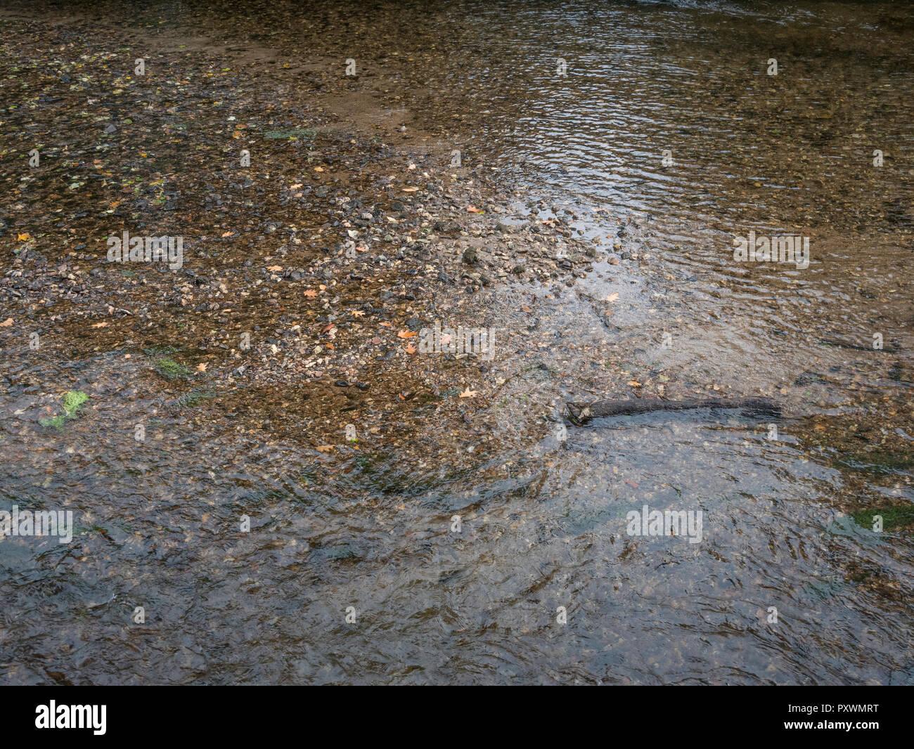 """Río poco profundo revelando el lecho del río de guijarros. Metáfora """"aguas de mar"""". Para el comercio del agua, el valor del agua, el agua como mercancía. Foto de stock"""