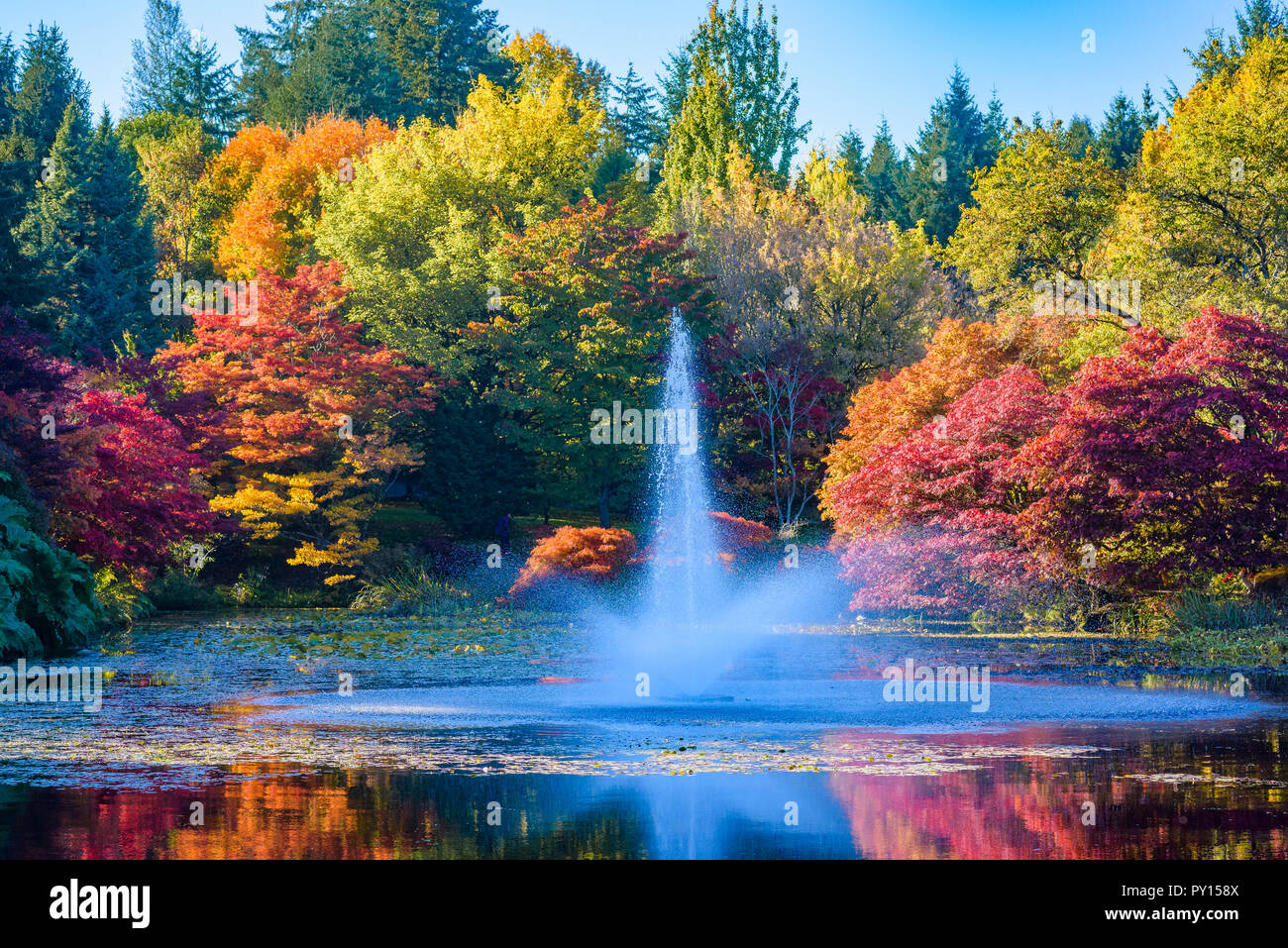 Color en el otoño, el Jardín Botánico VanDusen, Vancouver, British Columbia, Canadá Foto de stock