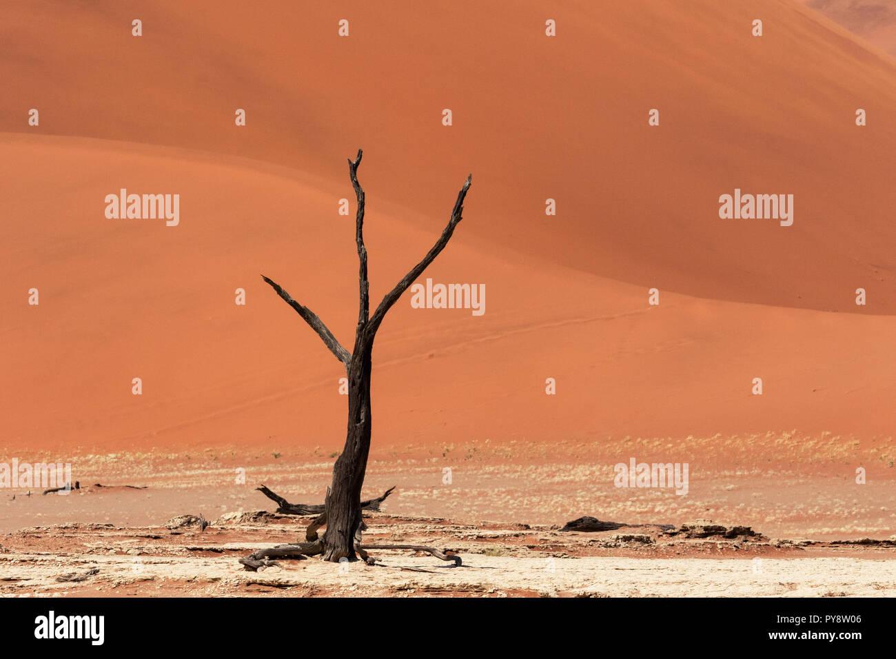 Deadvlei Namibia - los árboles muertos de 8000 años en las dunas del desierto de Namib, Namib Naukluft National Park, Namibia Foto de stock