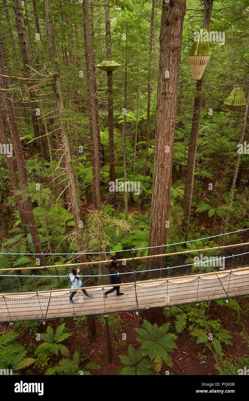 Los turistas de Redwoods Treewalk en los Redwoods Whakarewarewa (Bosque), Rotorua, Isla del Norte, Nueva Zelanda Foto de stock