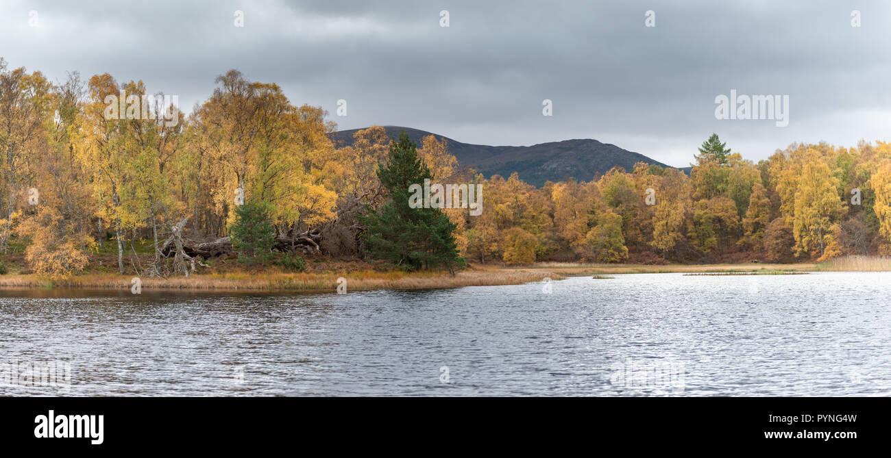 Magníficos colores de otoño entre los árboles al borde de un pequeño lago en Rothiemurchus estate, cerca de Aviemore en las Highlands escocesas. Foto de stock