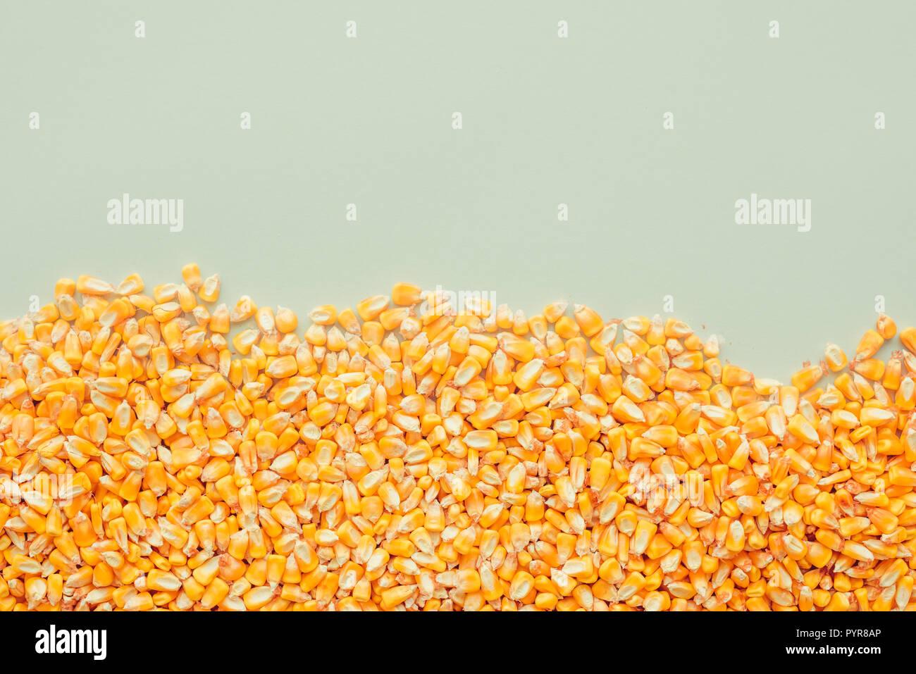Fondo de granos de maíz cosechado con copia espacio, concepto de abundancia y gran rendimiento tras la exitosa cosecha Imagen De Stock