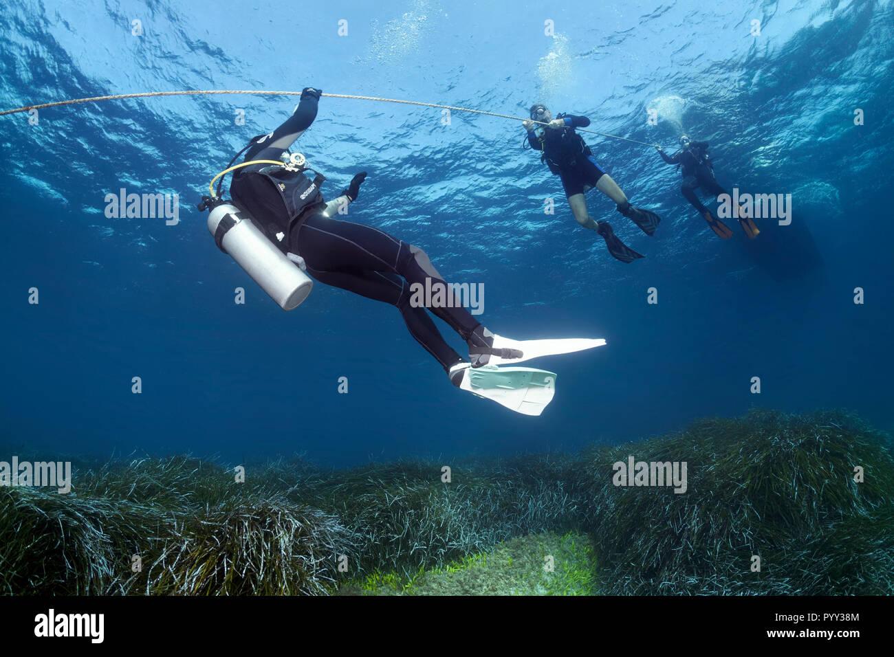 Los buceadores de la cuerda de buceo, barco de buceo, Neptune Grass (Posidonia oceanica), el Mar Mediterráneo, al sur de Chipre, Chipre Imagen De Stock