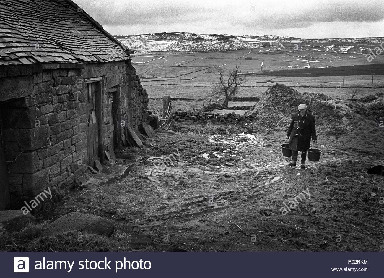 Un granjero lleva Staffordshire baldes de agua a través de sus corrales para el ganado en un frío día de invierno Imagen De Stock
