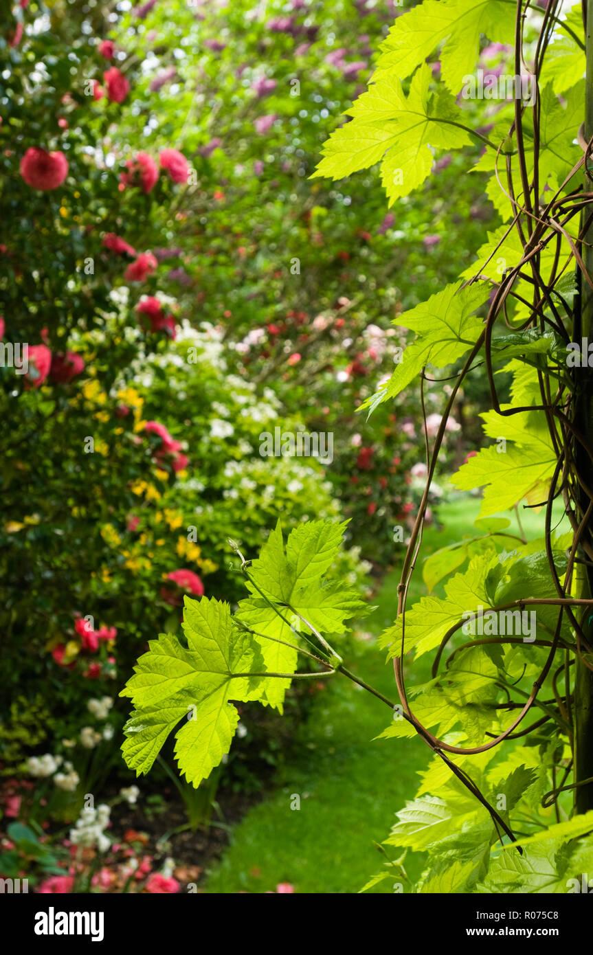 Jardín de flores Foto de stock