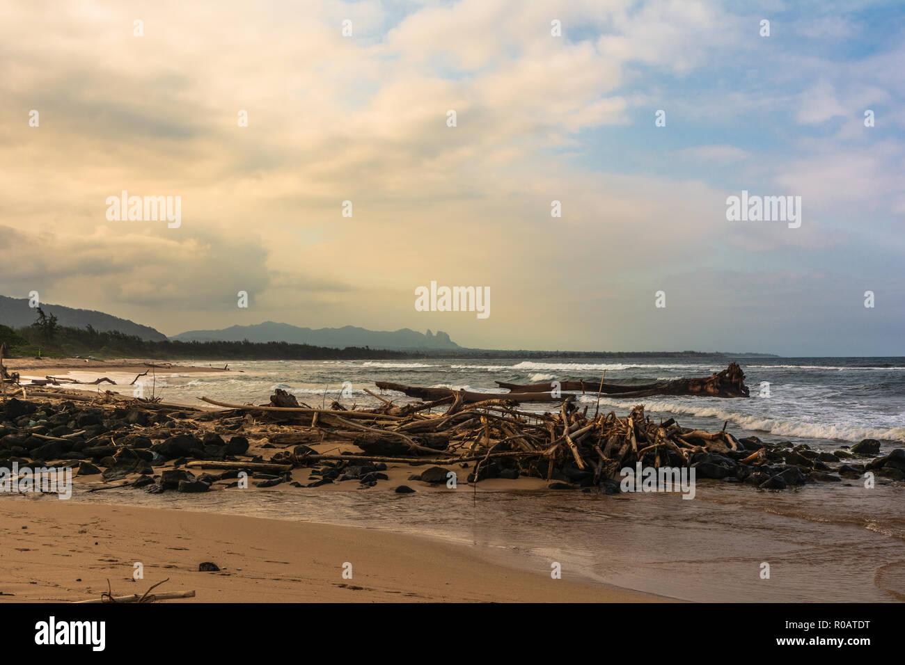 Los árboles muertos en la playa al amanecer junto Nukolii Beach Park, Kauai Hawaii Foto de stock