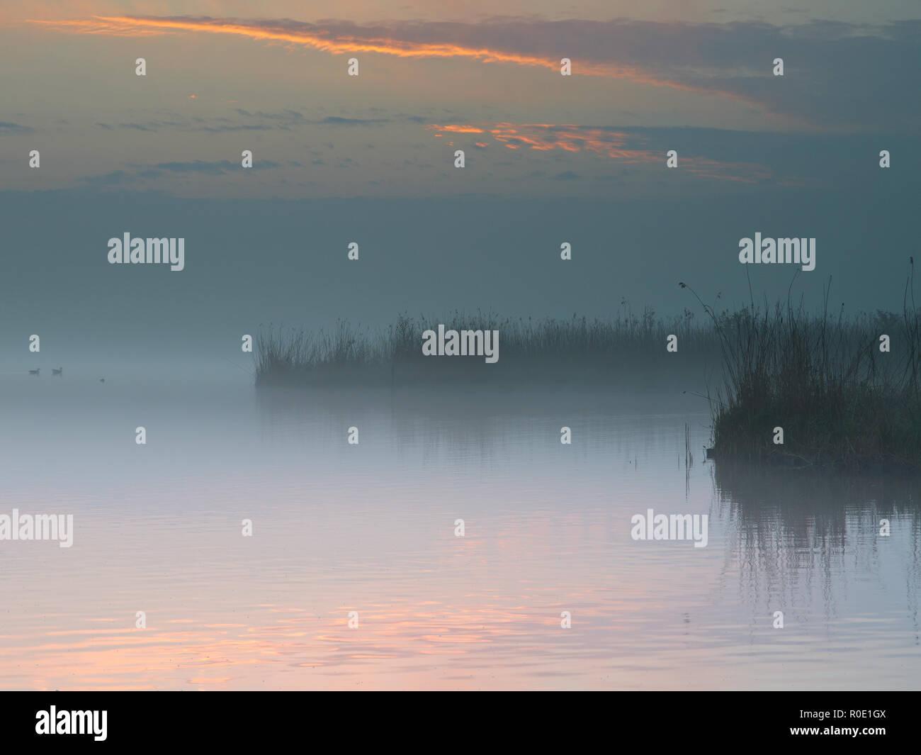 Oevers van een meer de nevel op een lente ochtend Imagen De Stock