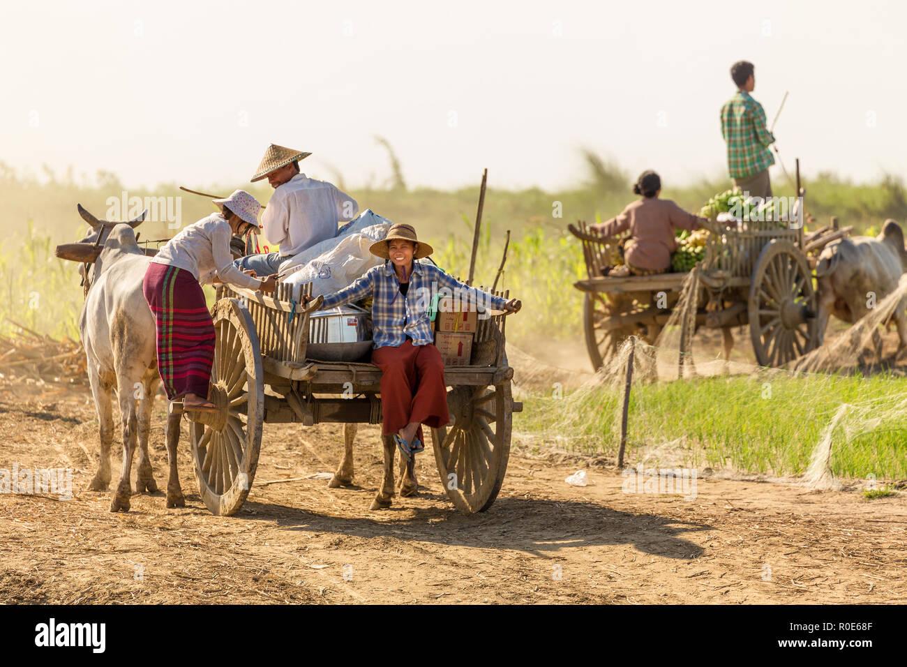 BAGAN, Myanmar, 21 de enero de 2015 : los agricultores birmanos conducir una carreta de descarga están llegando a un barco de alimentos y materiales a lo largo del río Irrawaddy ne Foto de stock
