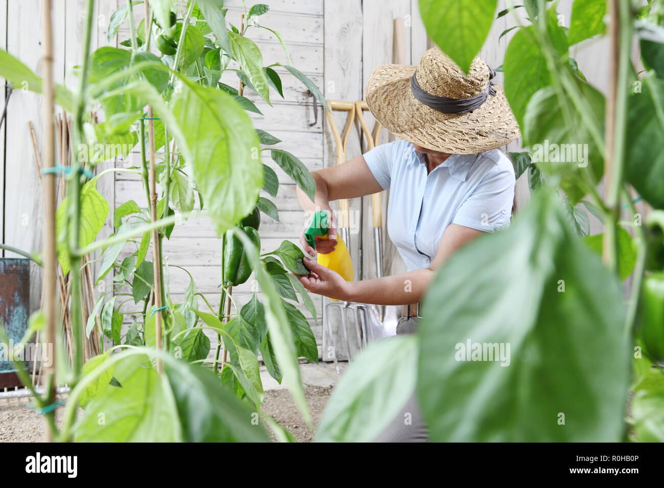Mujer en huerta rocía plaguicida en la hoja de la planta, el cuidado de las plantas de crecimiento concepto Foto de stock