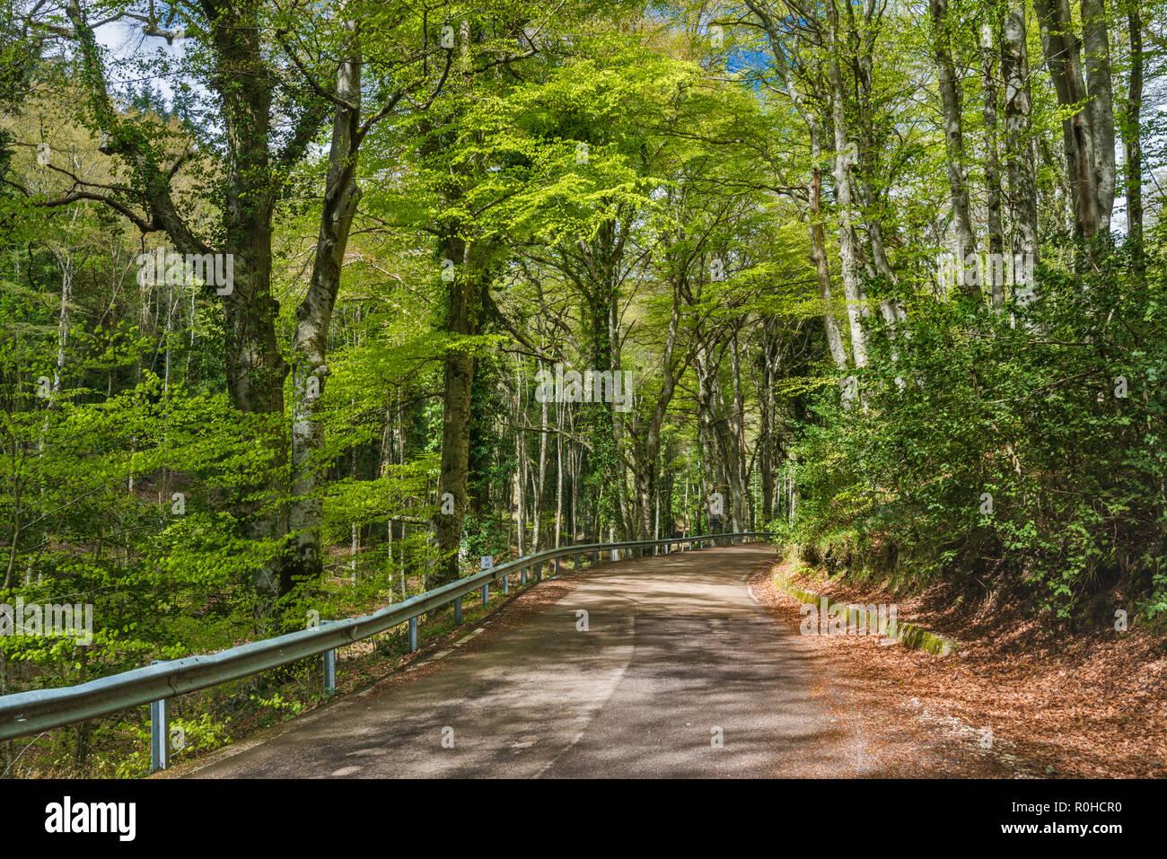 Palestra Vico Del Gargano unión haya (fagus sylvatica) bosque, foresta umbra, parque
