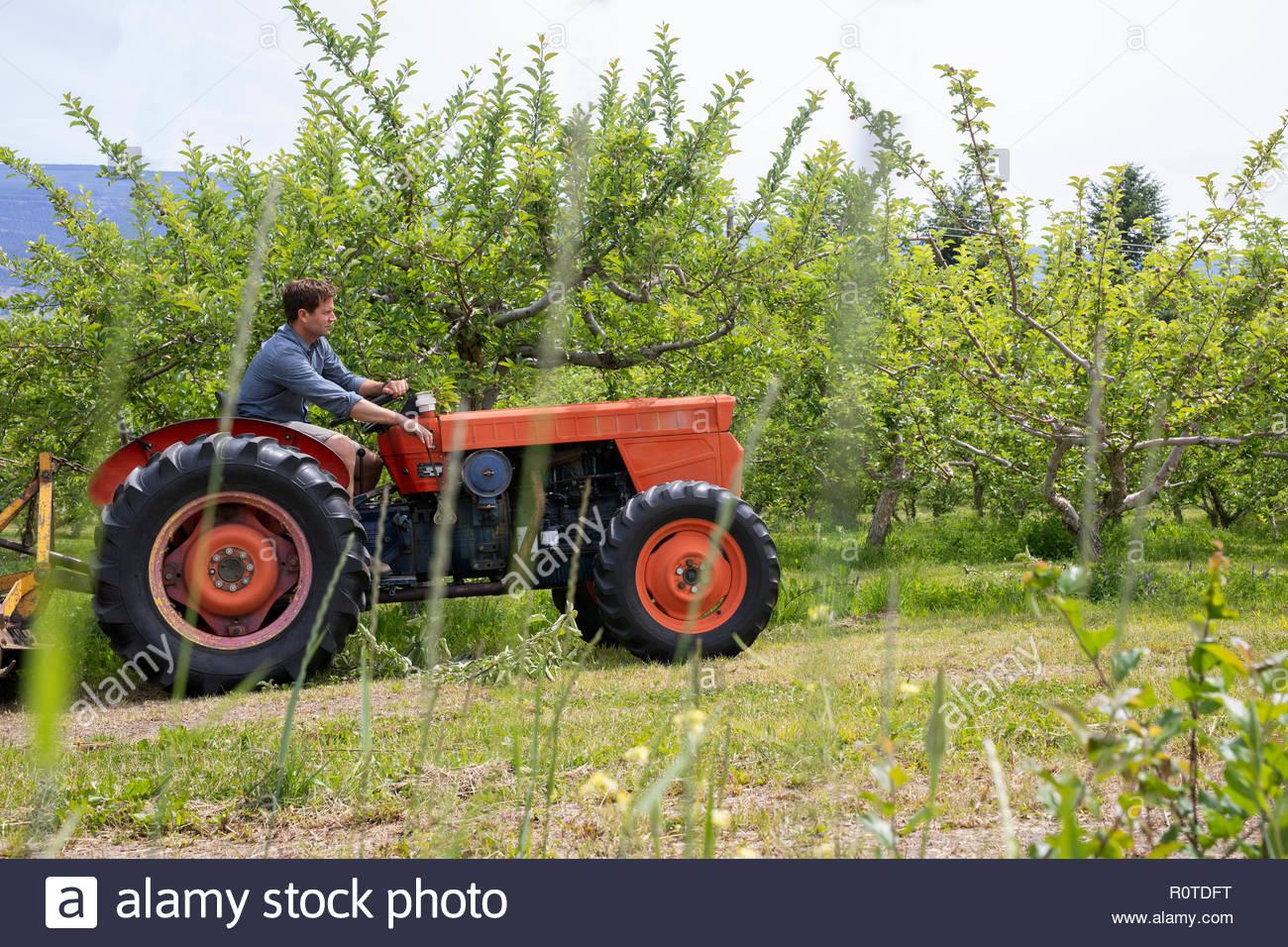 Agricultor conduciendo el tractor en huerto Imagen De Stock