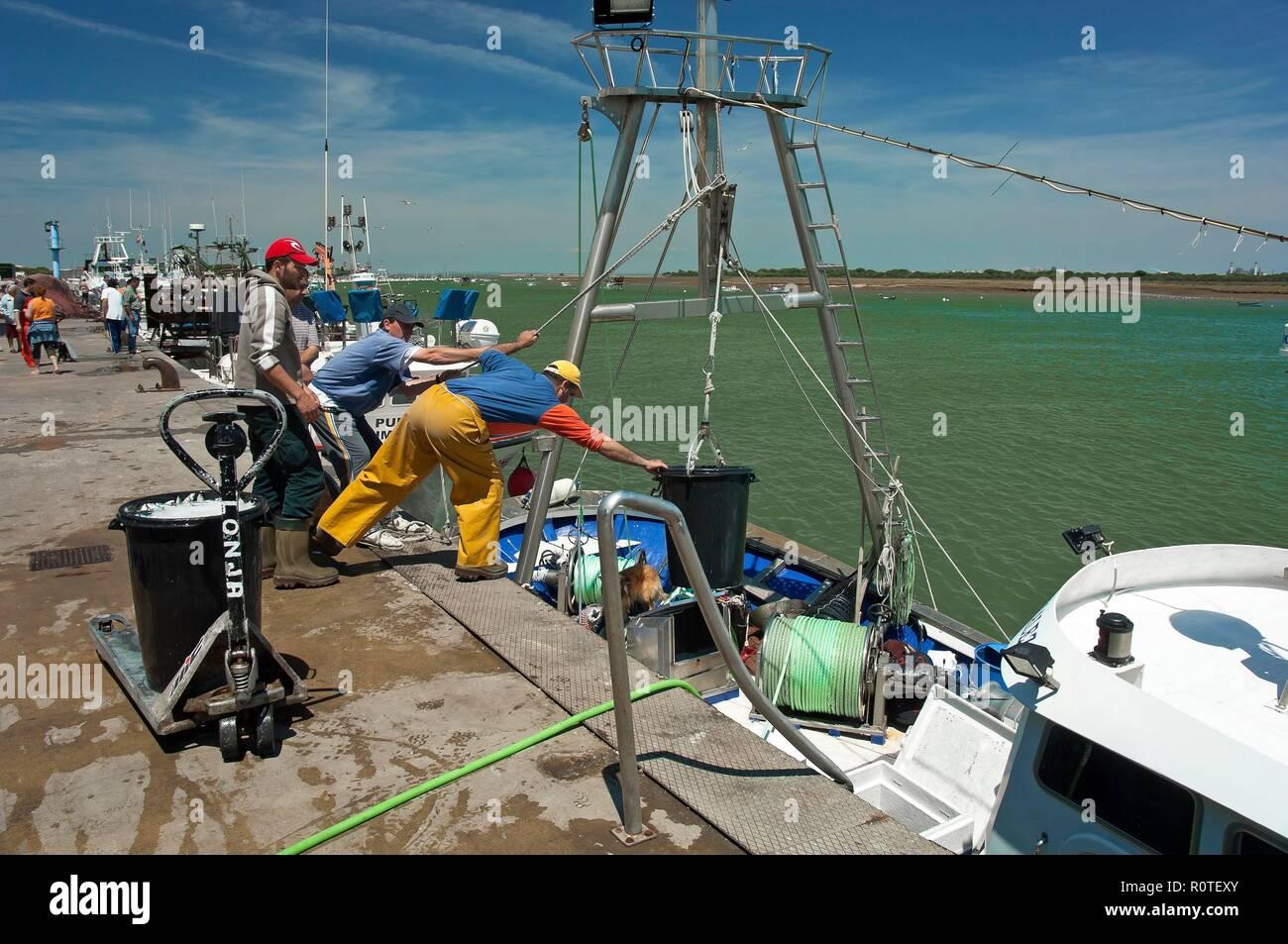 Puerto pesquero, Punta Umbría, Huelva, provincia, región de Andalucía, España, Europa. Foto de stock