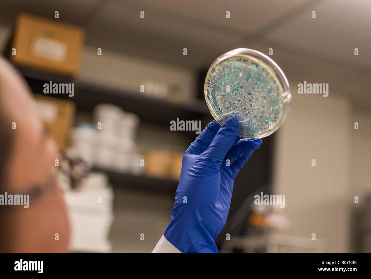 La investigación biomédica en un microbioma y microorganismo Foto de stock