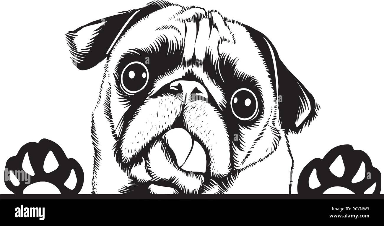 Pug Puppy Cartoon Imágenes De Stock Pug Puppy Cartoon