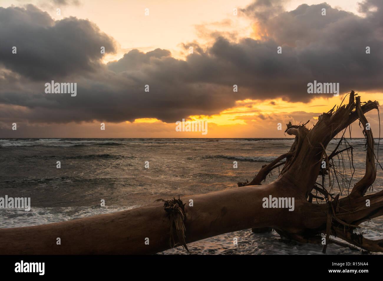 Árbol muerto en la playa al amanecer en Waipouli Costa, Kauai, Hawai Foto de stock