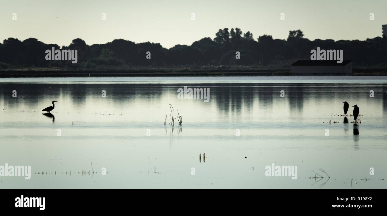 Las aves buscando el enfrentamiento en el lago, alto contraste Imagen De Stock