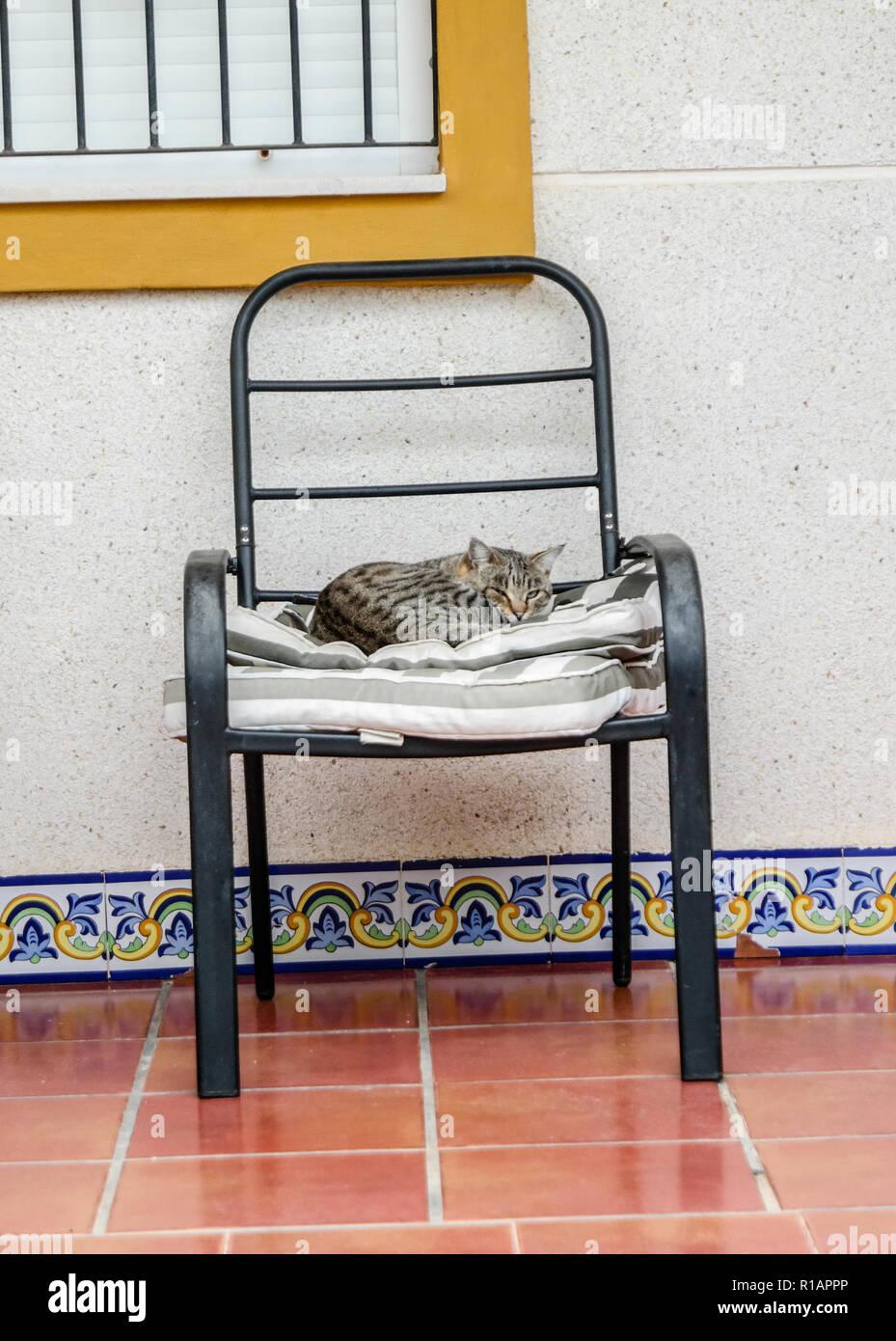 La hora de la siesta de gato Imagen De Stock