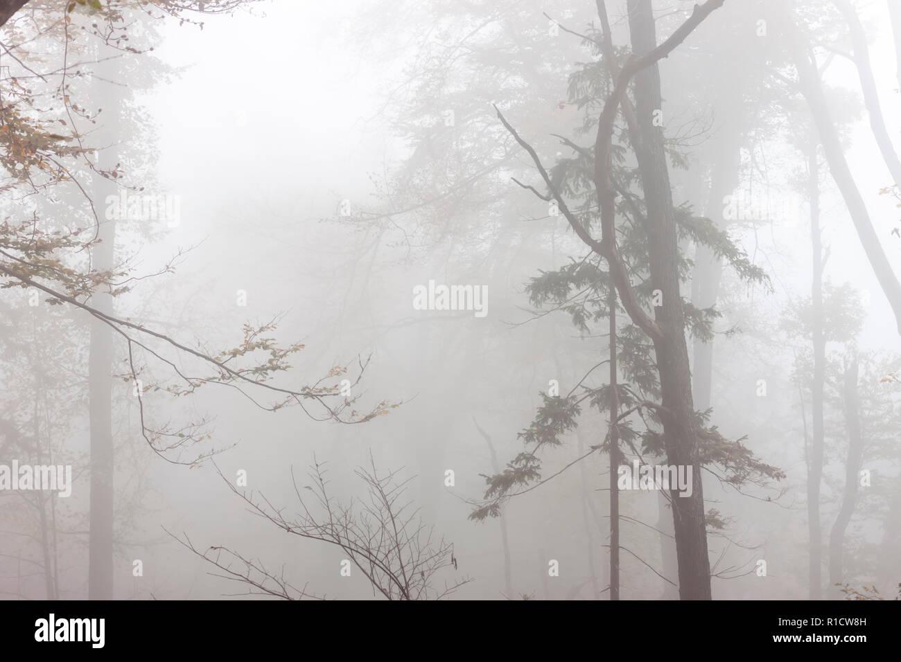 Misterioso bosque de niebla otoño scary luz de fondo Foto de stock