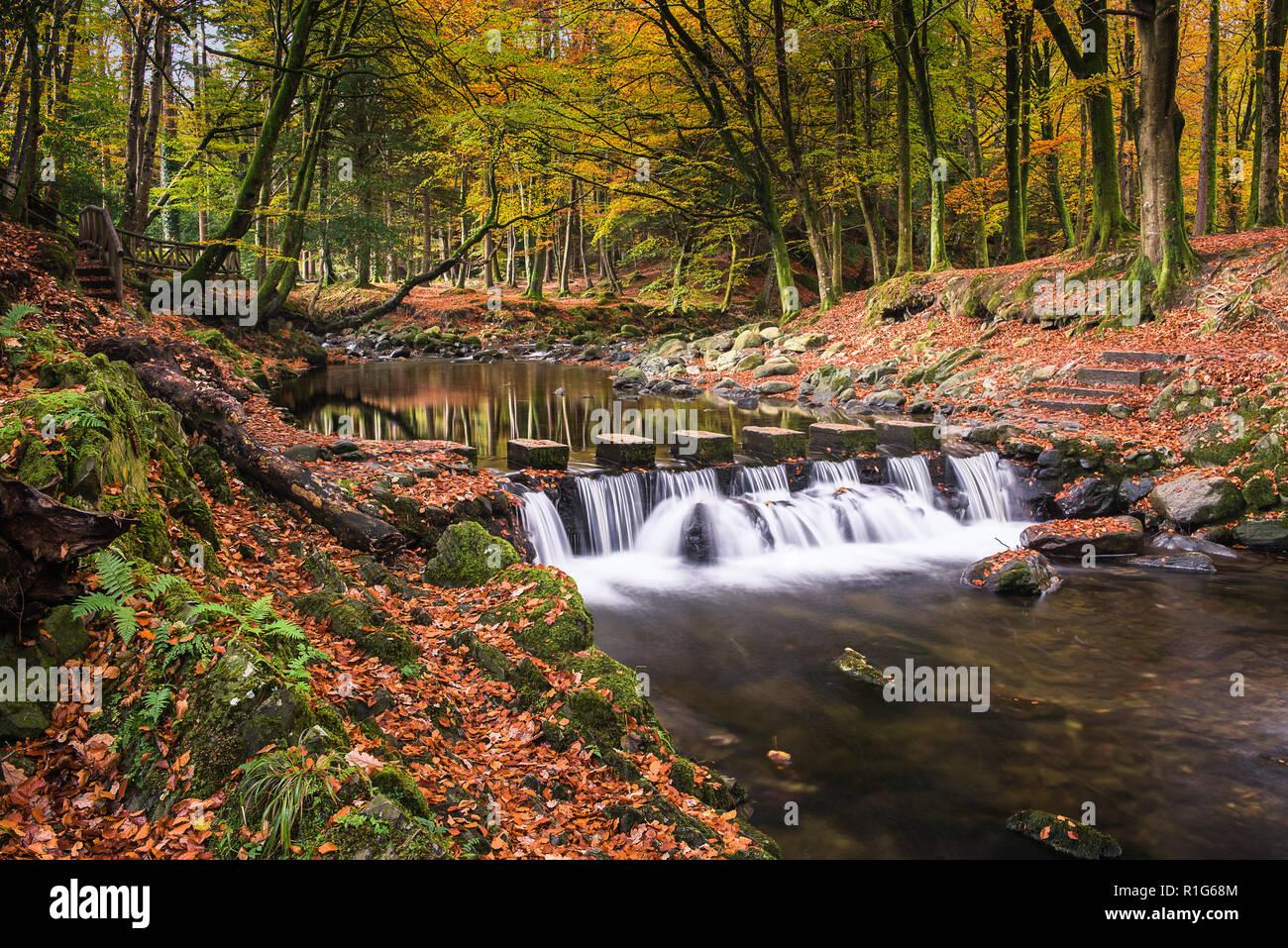 A través de la Shimna Stepping Stones River Forest, Tullymore N Irlanda Foto de stock