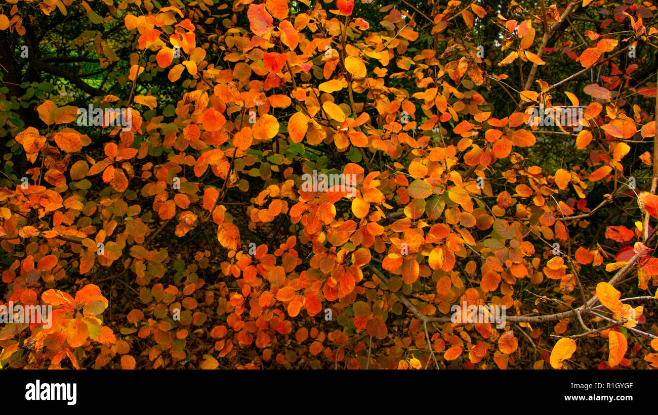 Hojas de otoño en Milán Foto de stock