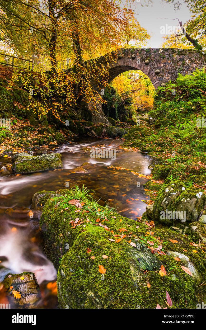Puente Tullymore Folys dentro del Parque Forestal en otoño. Foto de stock