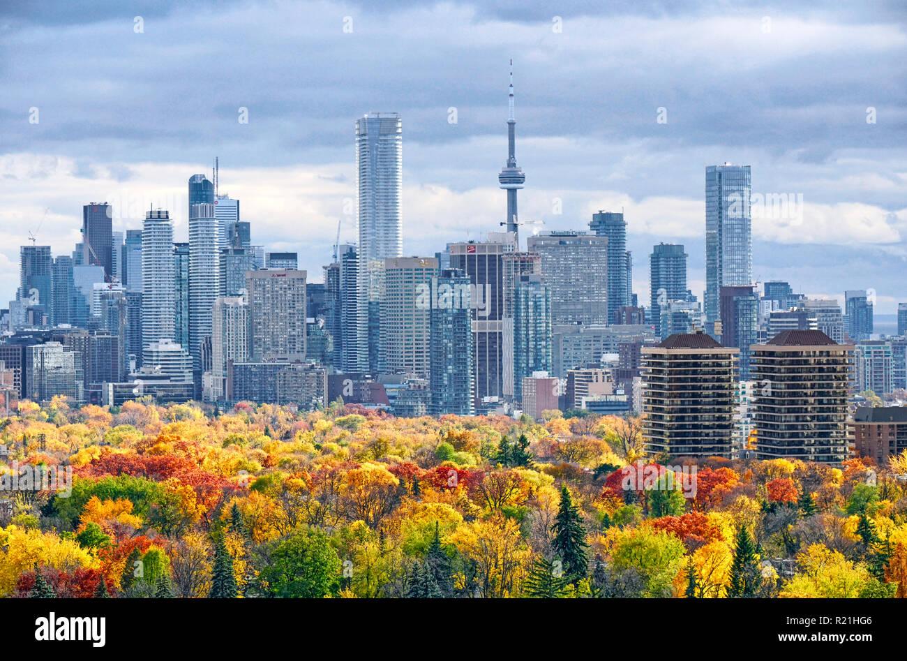 Otoño de Toronto skyline incluyendo grandes downtown y midtown landmark edificios con colores de otoño en el árbol de primer plano Foto de stock