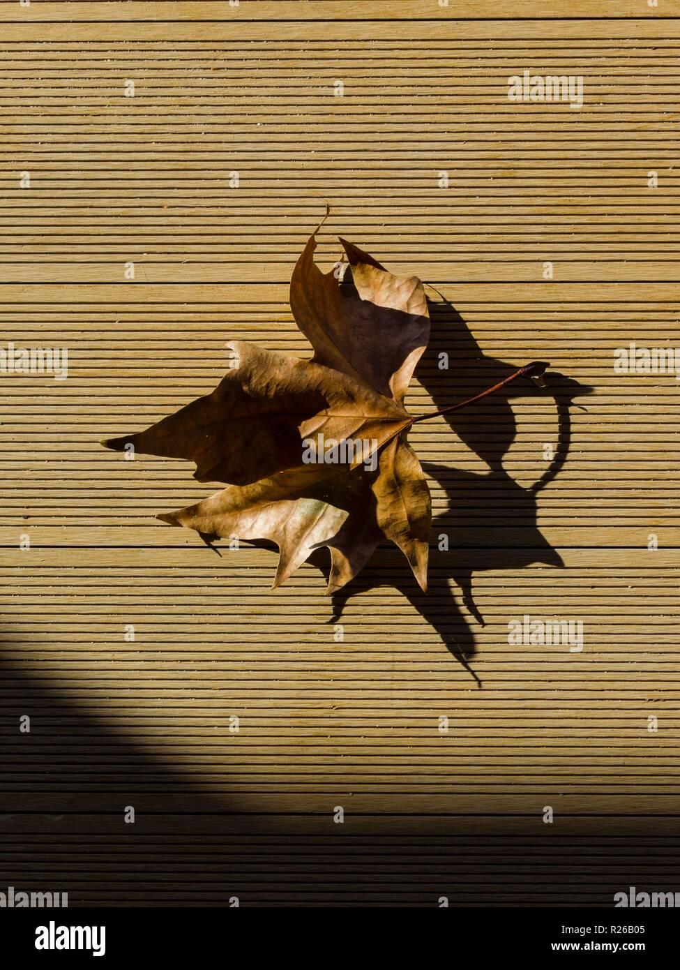 Brown ex Hoja de Otoño en suelo marrón Foto de stock