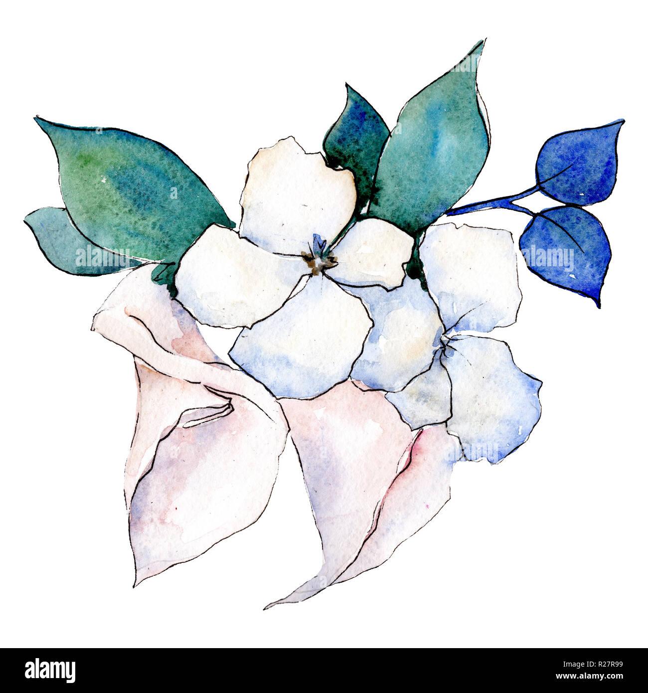 Hortensia Flores Blancas Ilustracion De Flores Aisladas Elemento