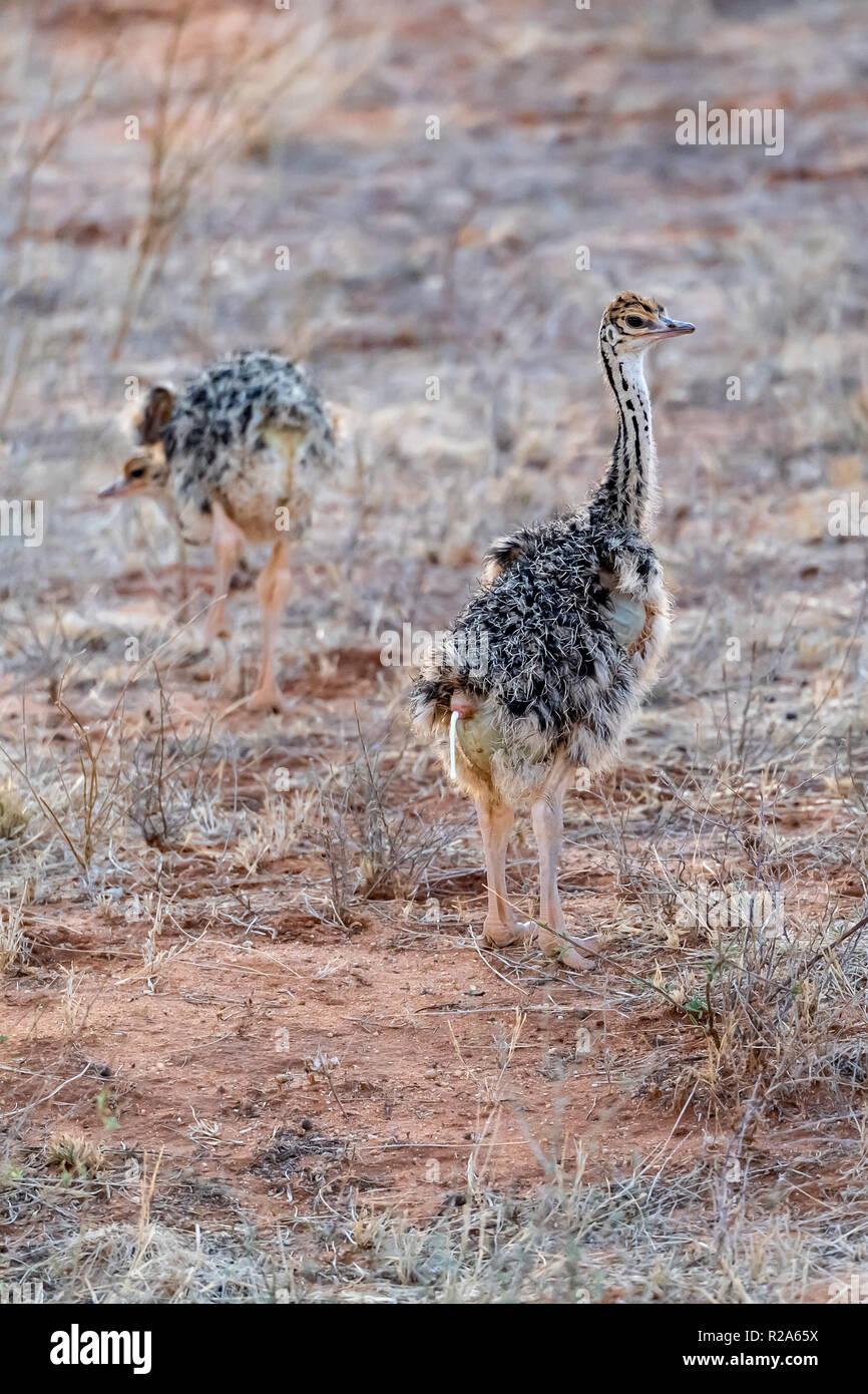 54 Koleksi Gambar Fauna Khas Neartik HD Terbaru